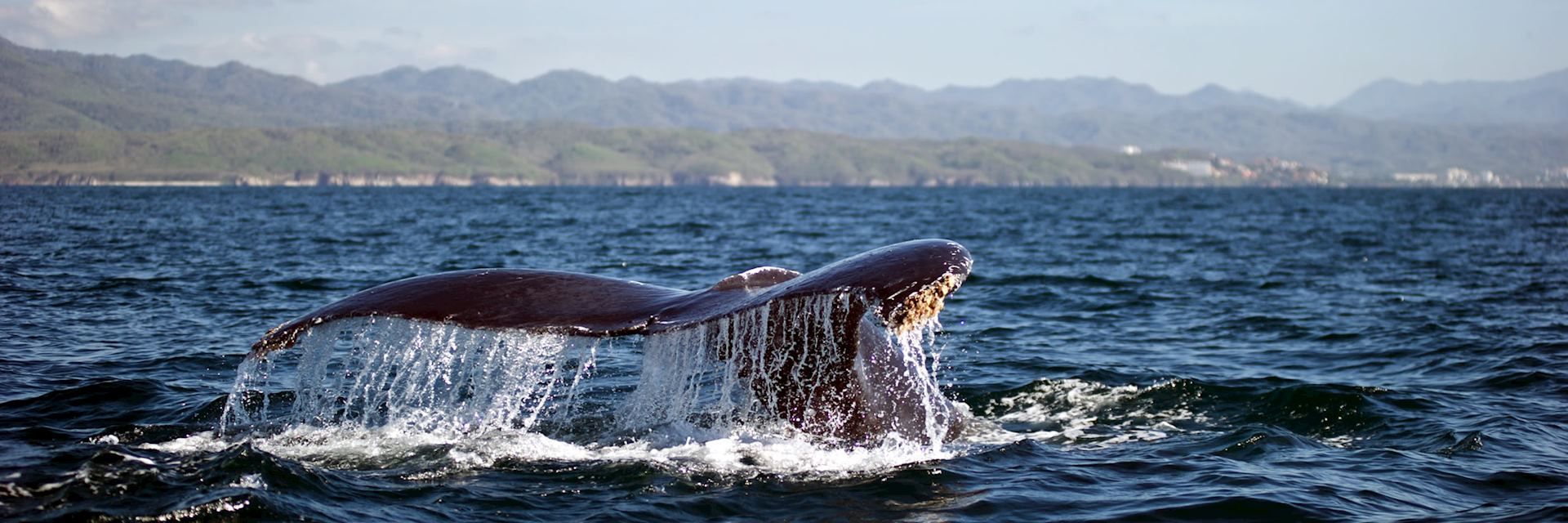 A whale surfaces off the coast of Puerto Vallarta