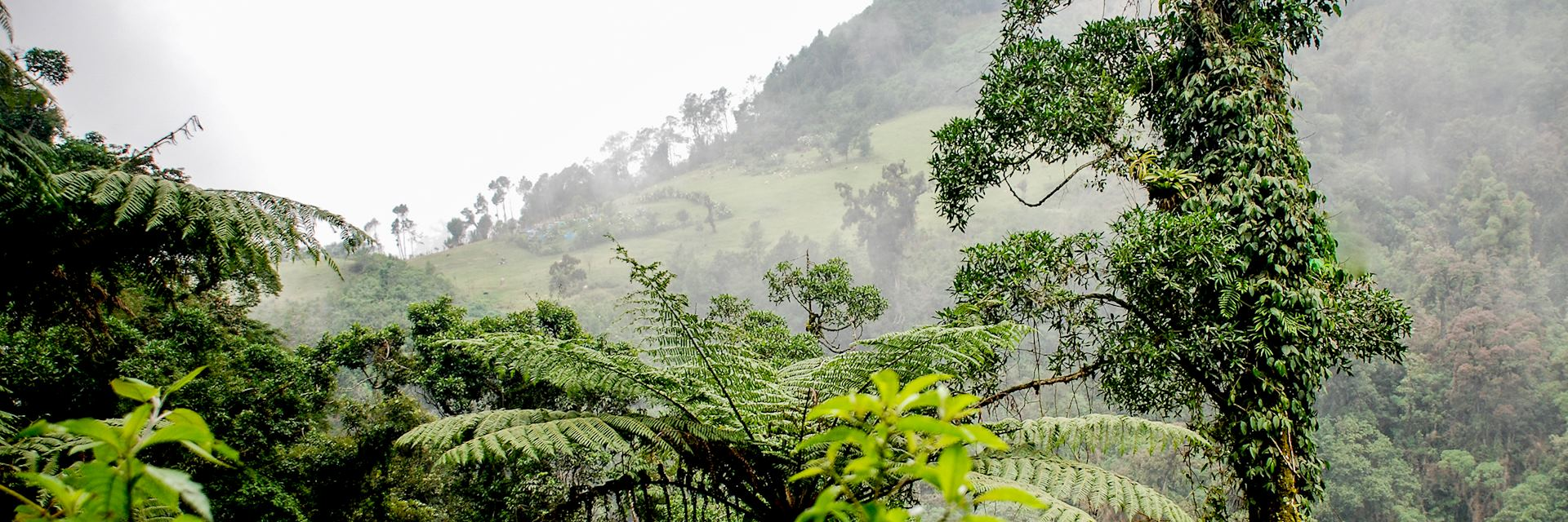 Countryside surrounding Tapachula