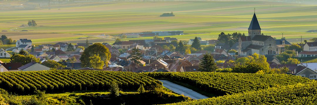 Champagne vineyards Sacy in Marne department, France