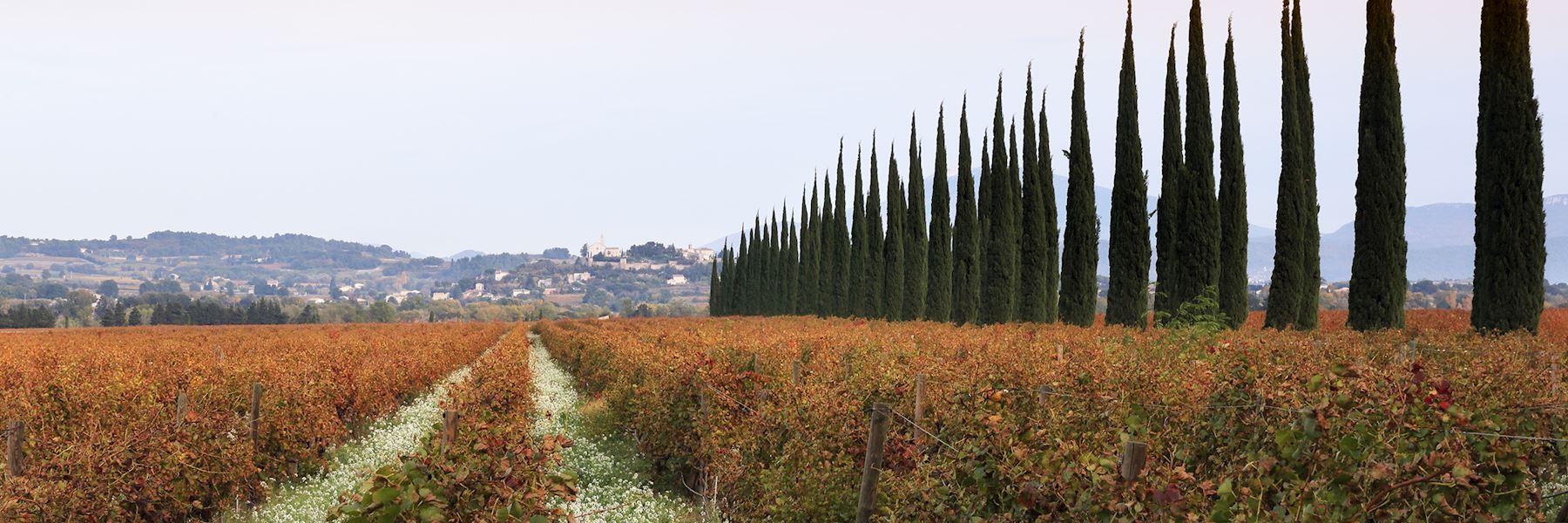 Visit Châteauneuf-du-Pape wine region, France