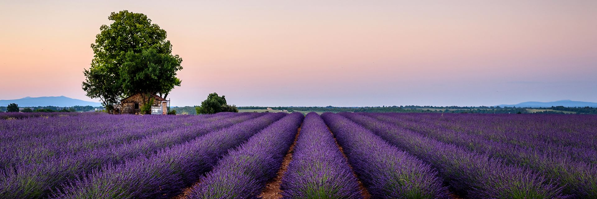 House in field of lavendar, Provence