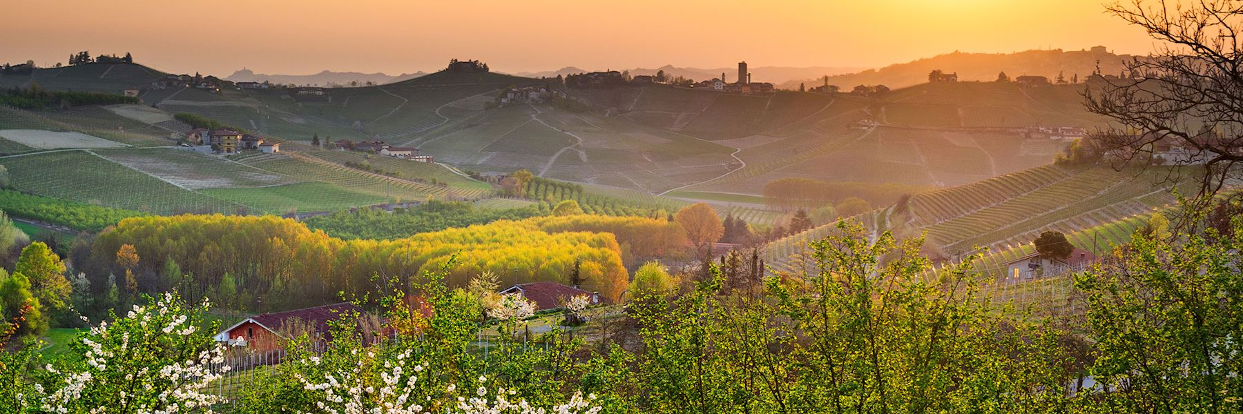 Visit Barbaresco, Italy