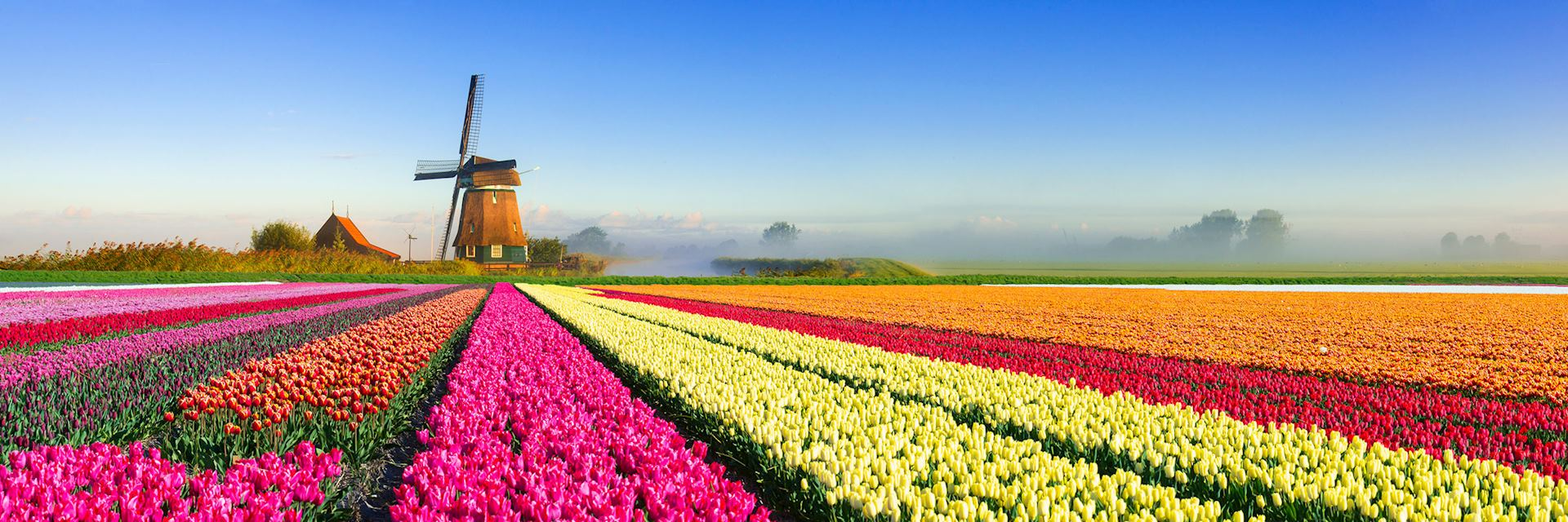 Spring, tulip field, Netherlands