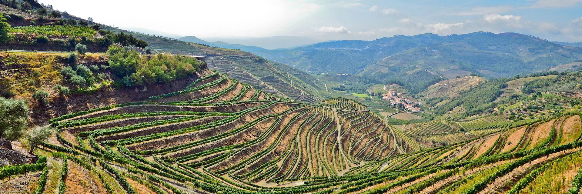 Vineyards near Pinhao, Portugal