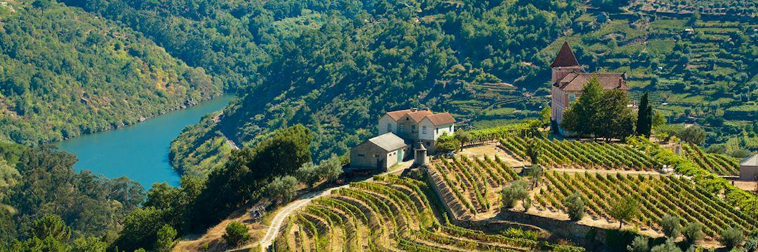 Vineyards, Douro Valley
