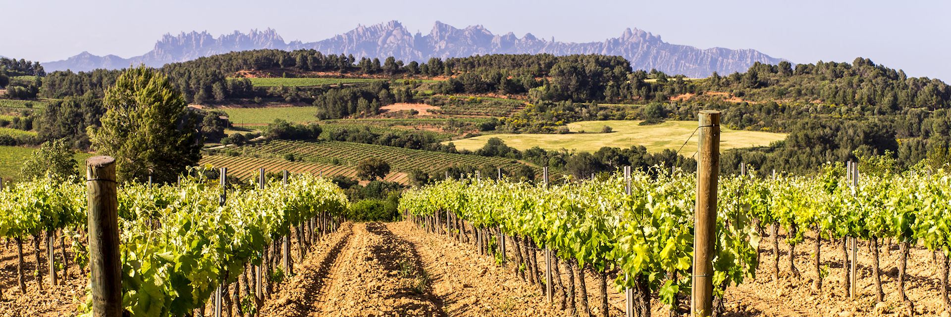 Vineyard, Montserrat, Catalonia