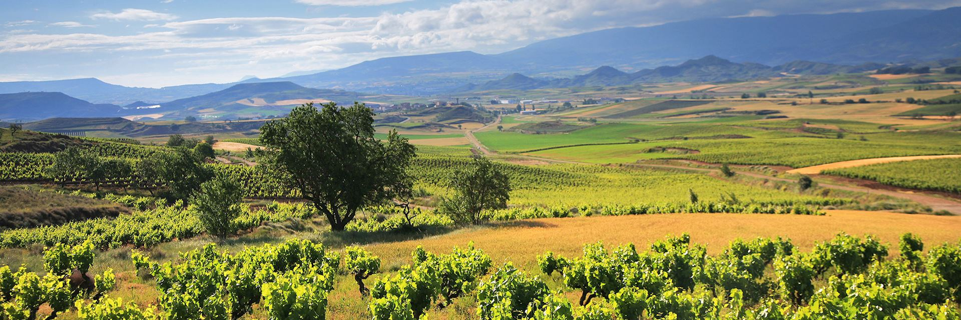 Vineyards in La Rioja wine region