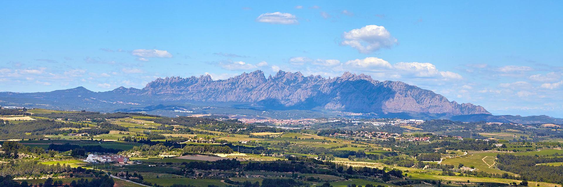 Vineyard, Montserrat