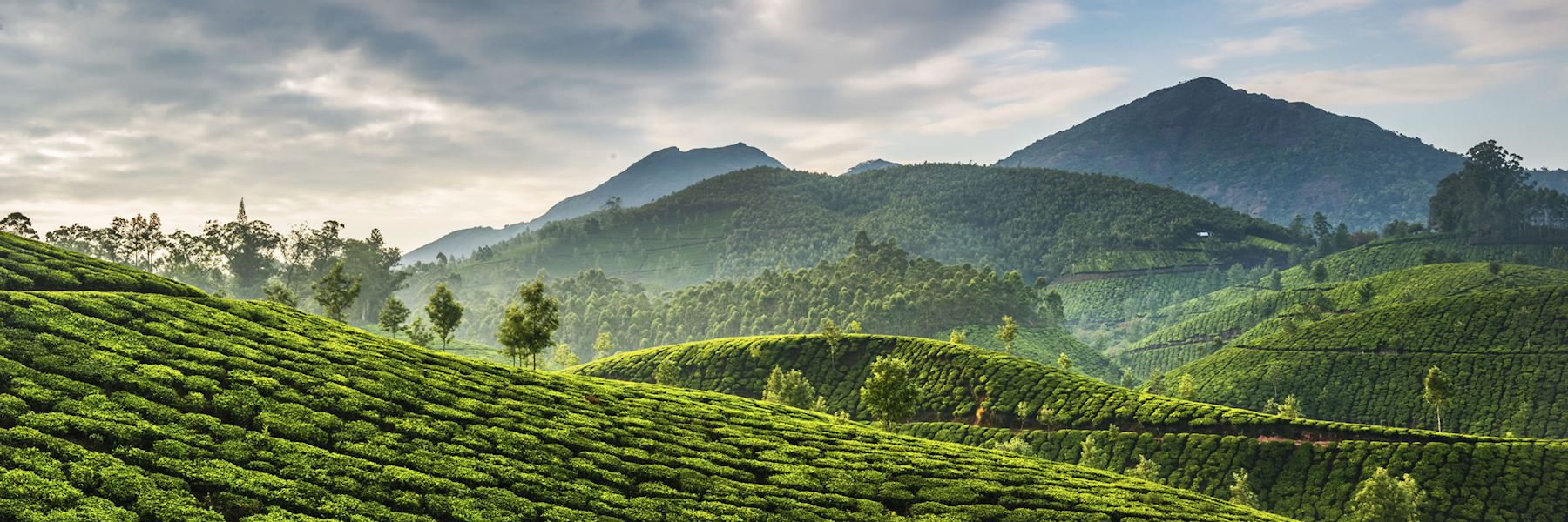 Visit Munnar On A Trip To India Audley Travel