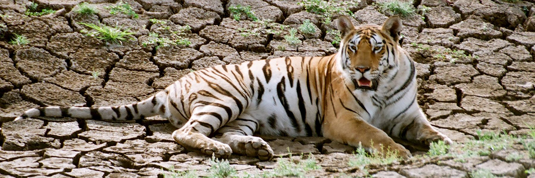 Visit Pench Tiger Reserve, India