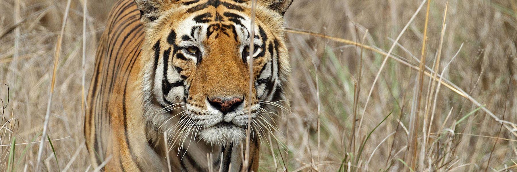 Visit Kanha National Park, India