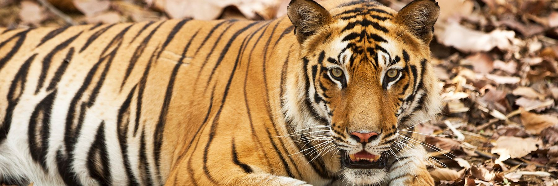 Visit Bandhavgarh National Park, India