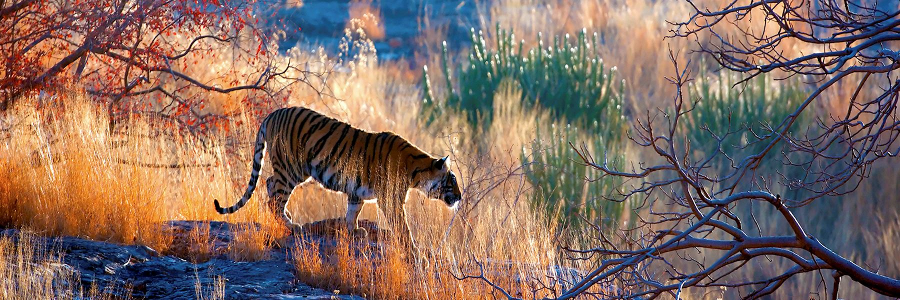 Corbett Tiger Reserve, India