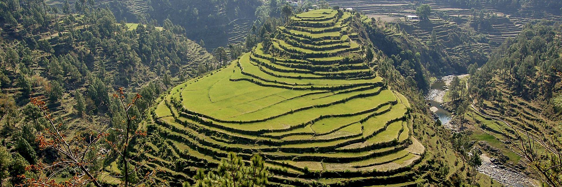 Rice terraces in Almora