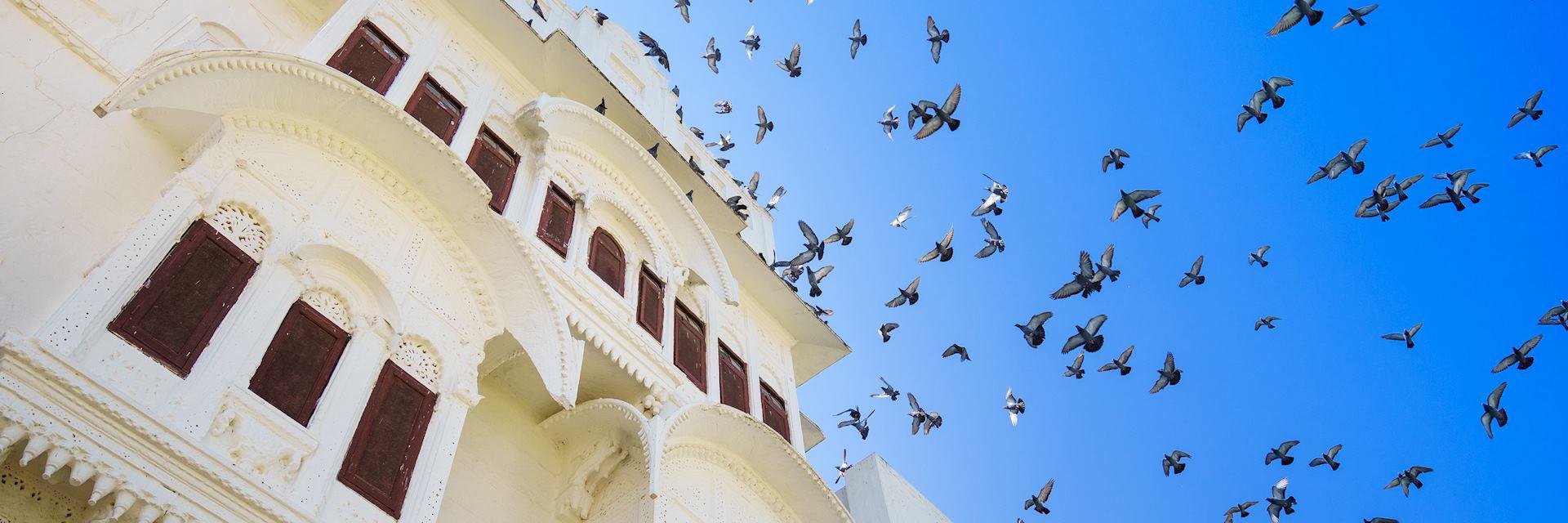 Birds in Nimaj