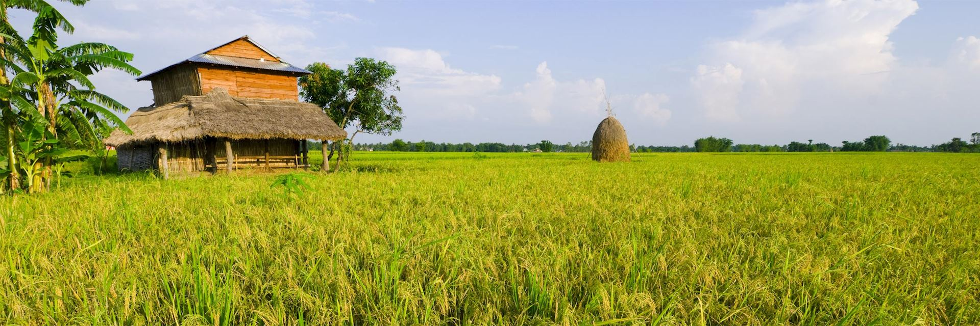 Rice paddy in Terai