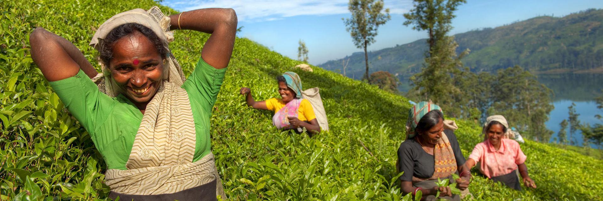 Tea plantation workers in Nuwara Eliya