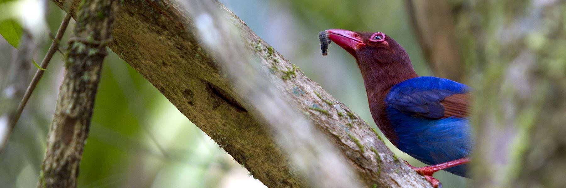 Visit Sinharaja Biosphere, Sri Lanka