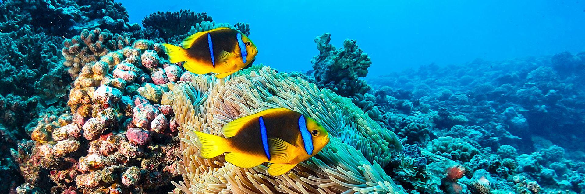Marine life, French Polynesia