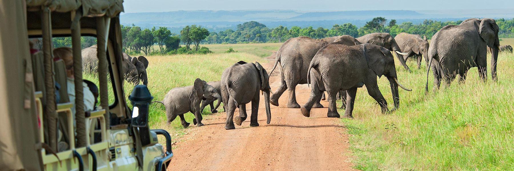 Safari honeymoons