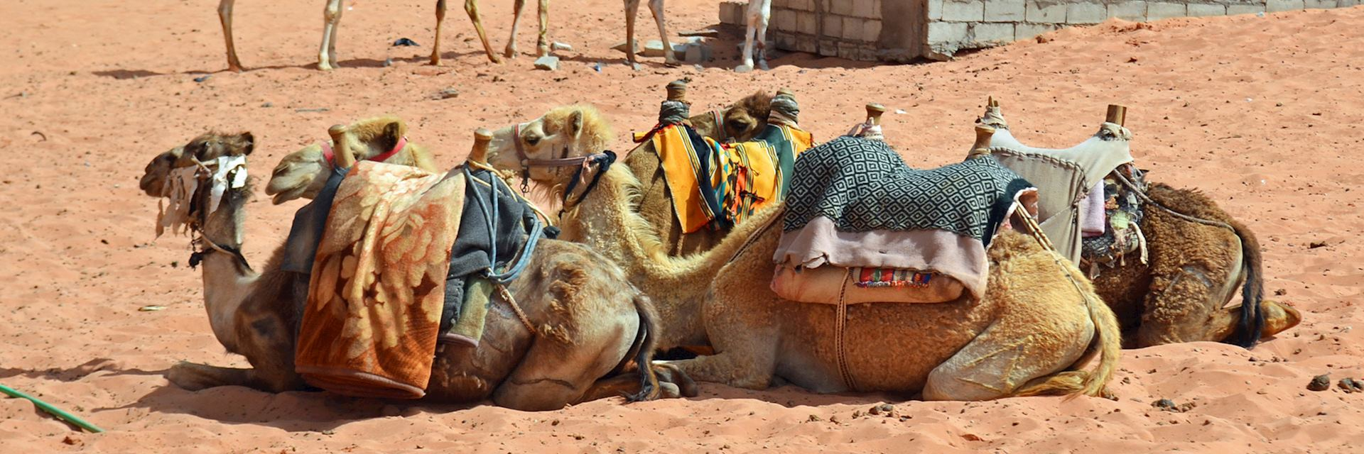 Desert transportation in Jordan