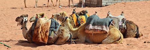 Desert transportation in Jordan