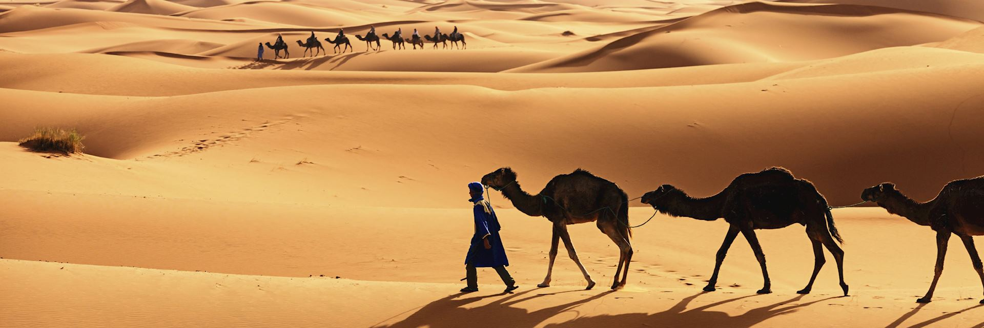 Tuareg camel train in the Western Sahara Desert