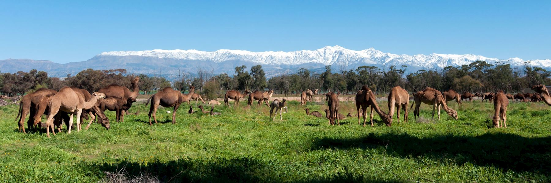Visit Taroudant, Morocco