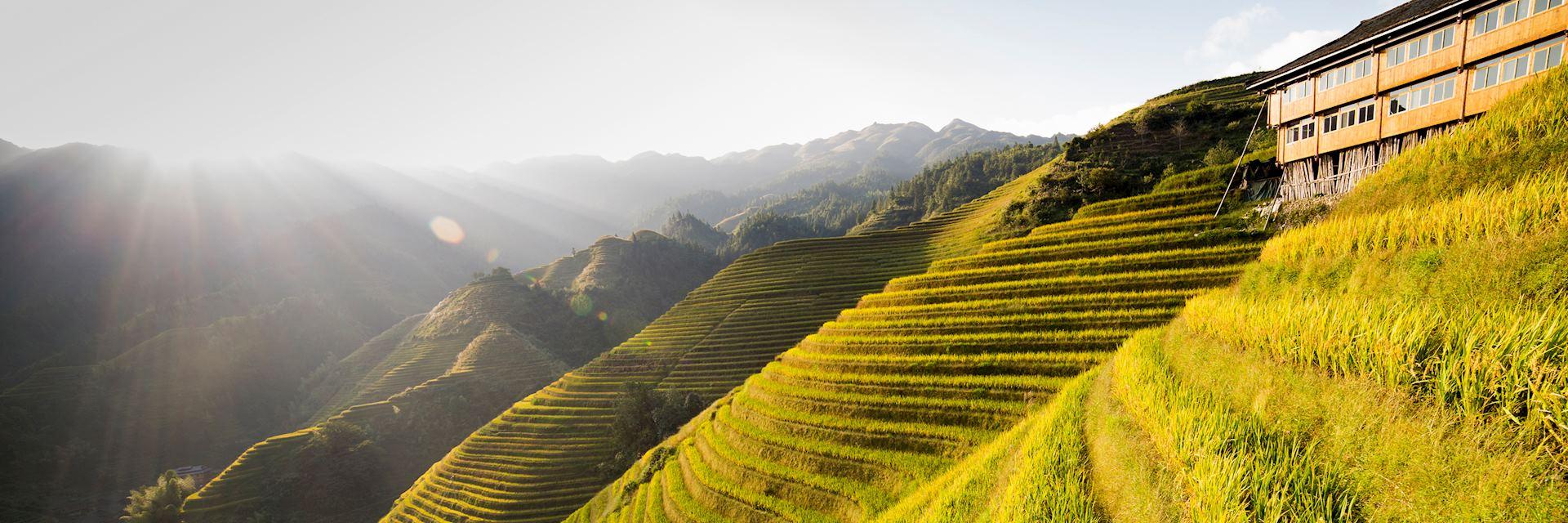 Rice terraces in Yuanyang