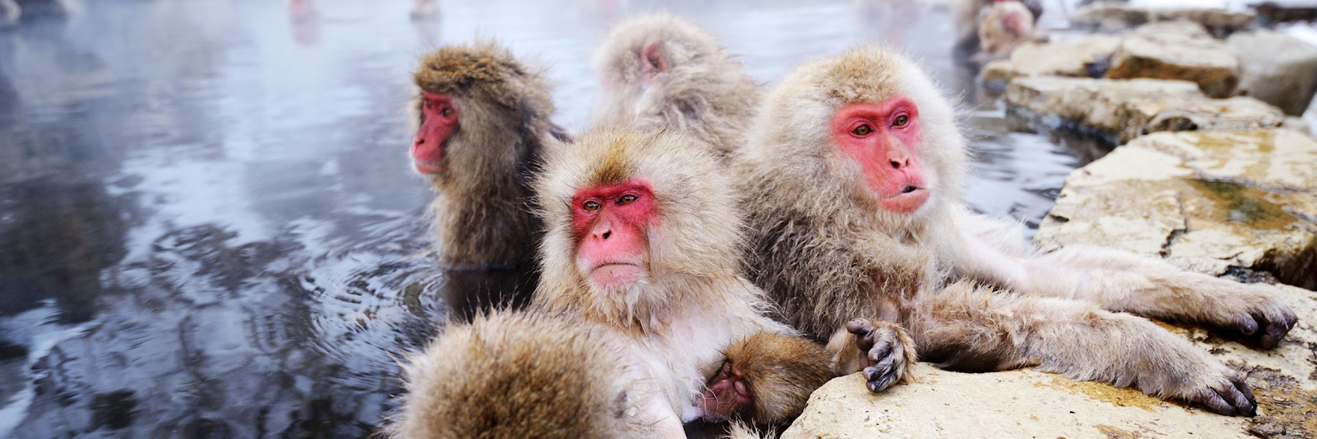 Japanese snow monkeys, Yudanaka
