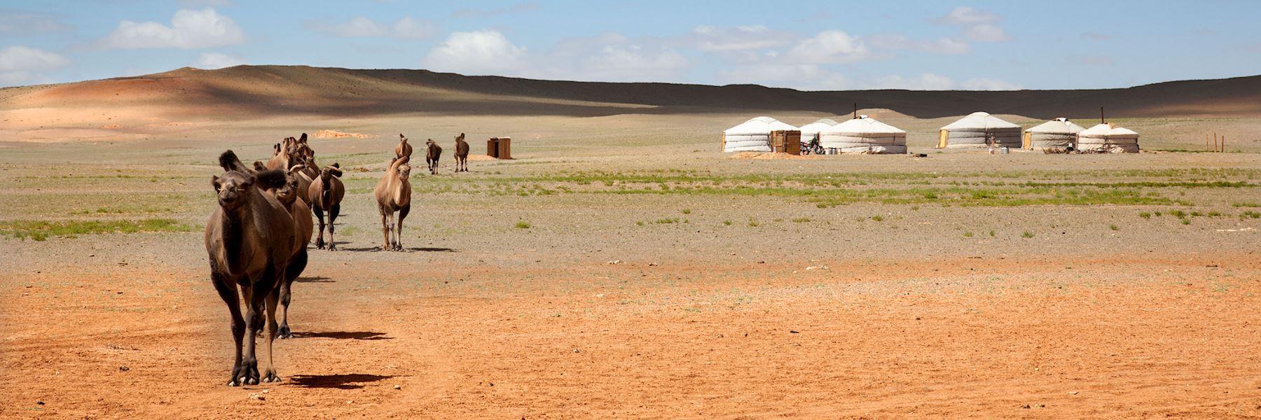 Visit the Gobi Desert, Mongolia