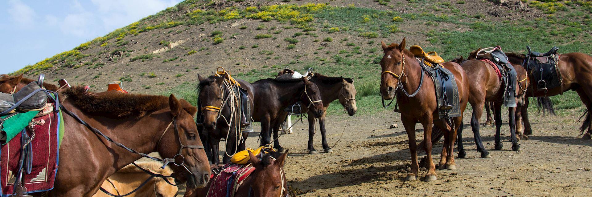Horses in Gobi Gurvansaikhan National Park