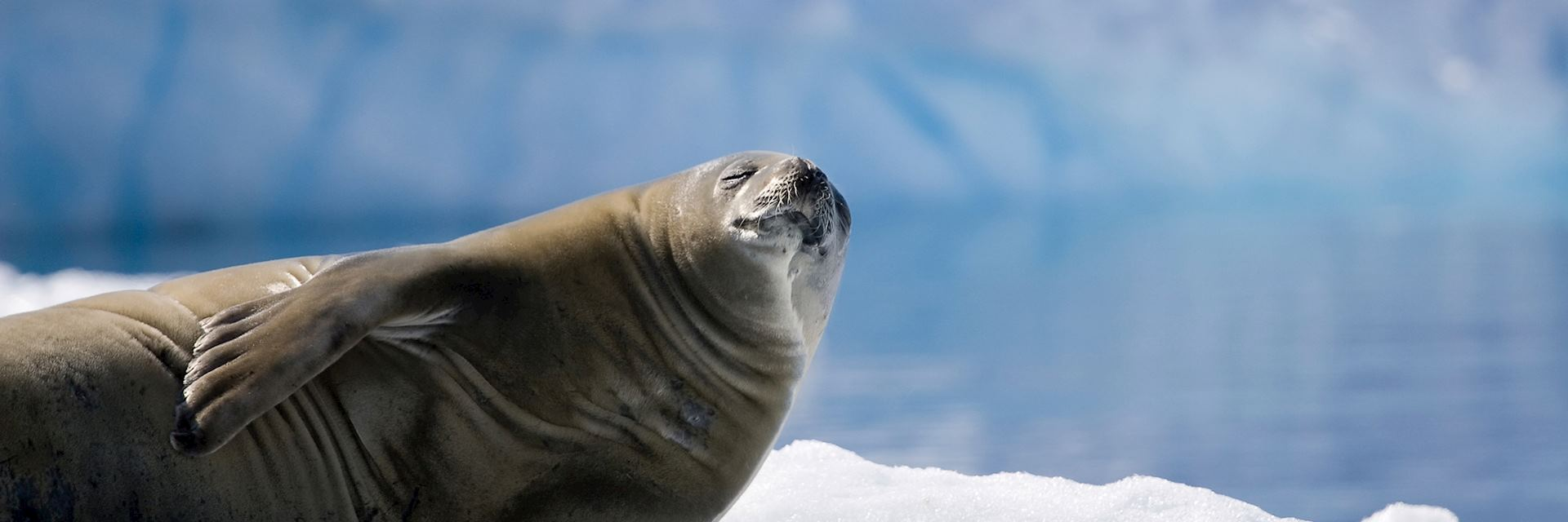A seal sunbathing in Antarctica