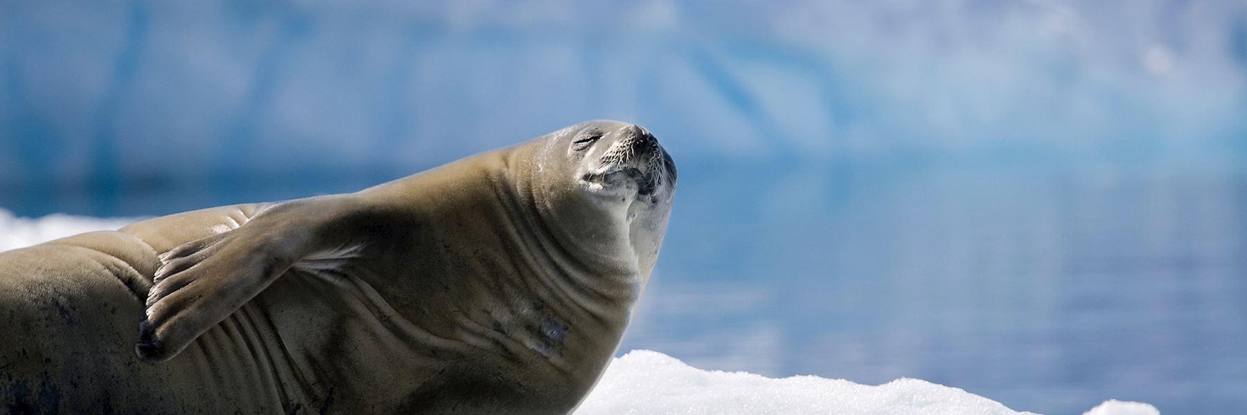 Visit South Georgia, Antarctica