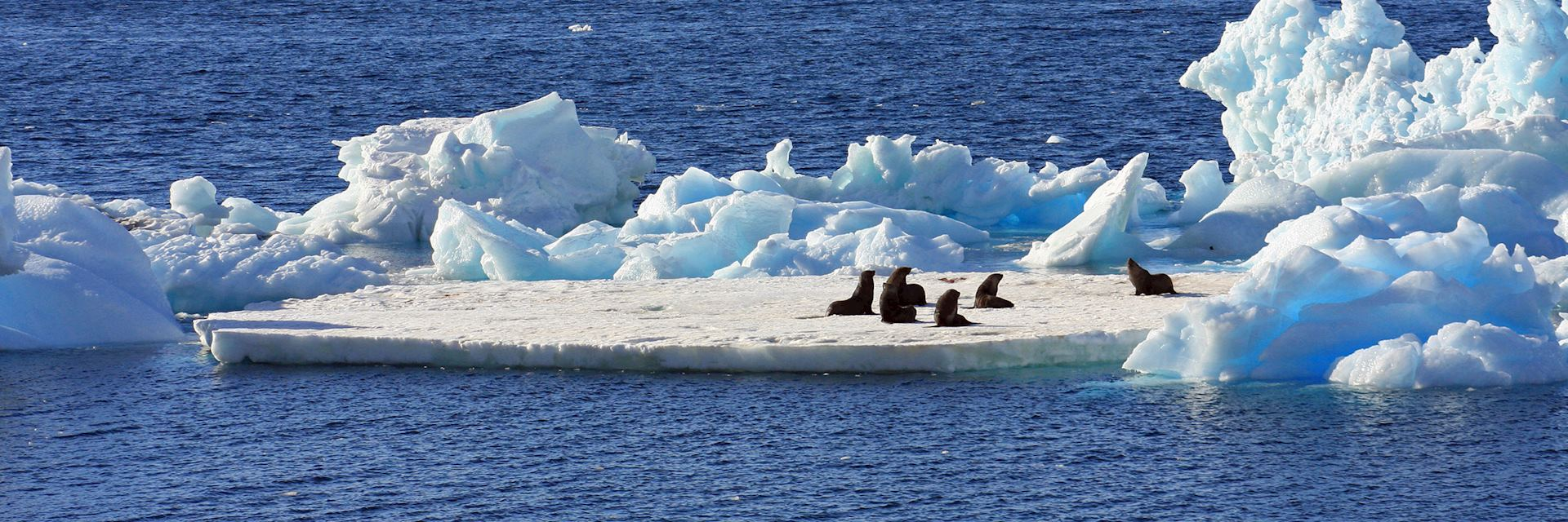 Fur seals on an ice flow, Antarctica
