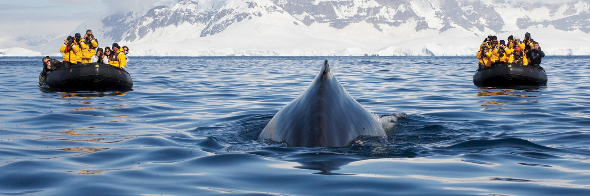 Two zodiac boats have a close encounter with a humpback whale