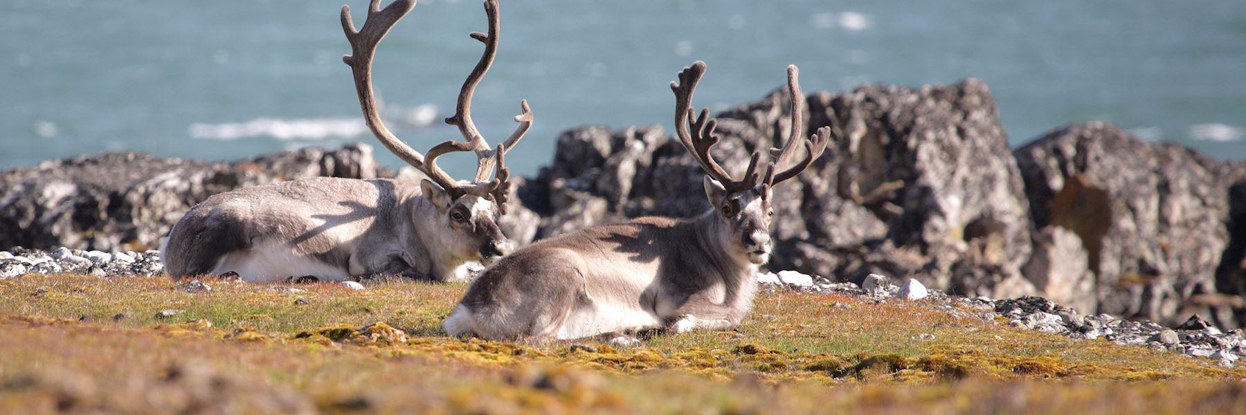 Arctic trip ideas