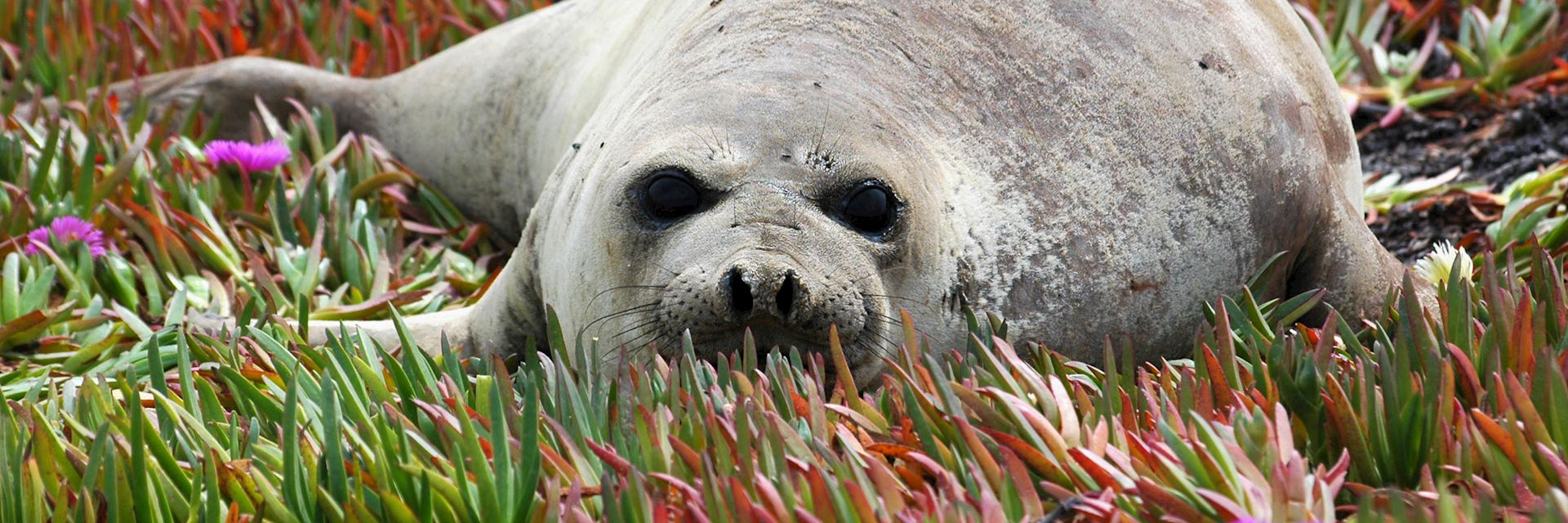 Baby seal at Peninsula Valdes