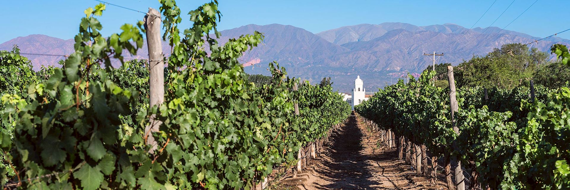 Cafayate vineyard