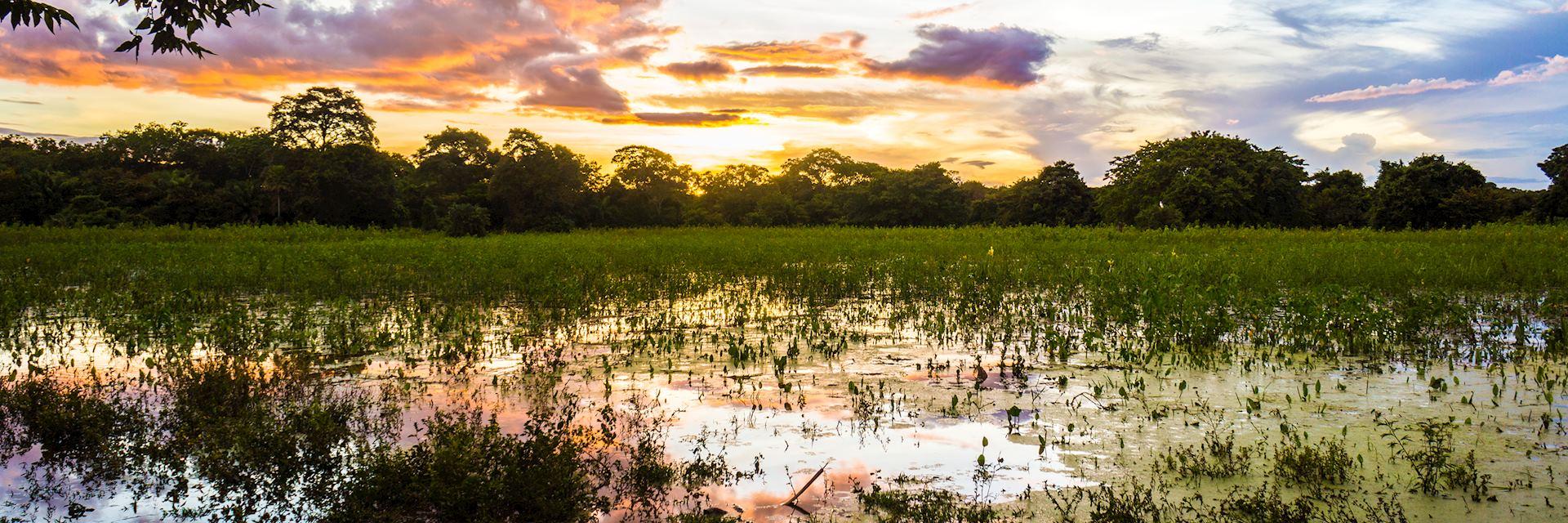 The Pantanal at sunset