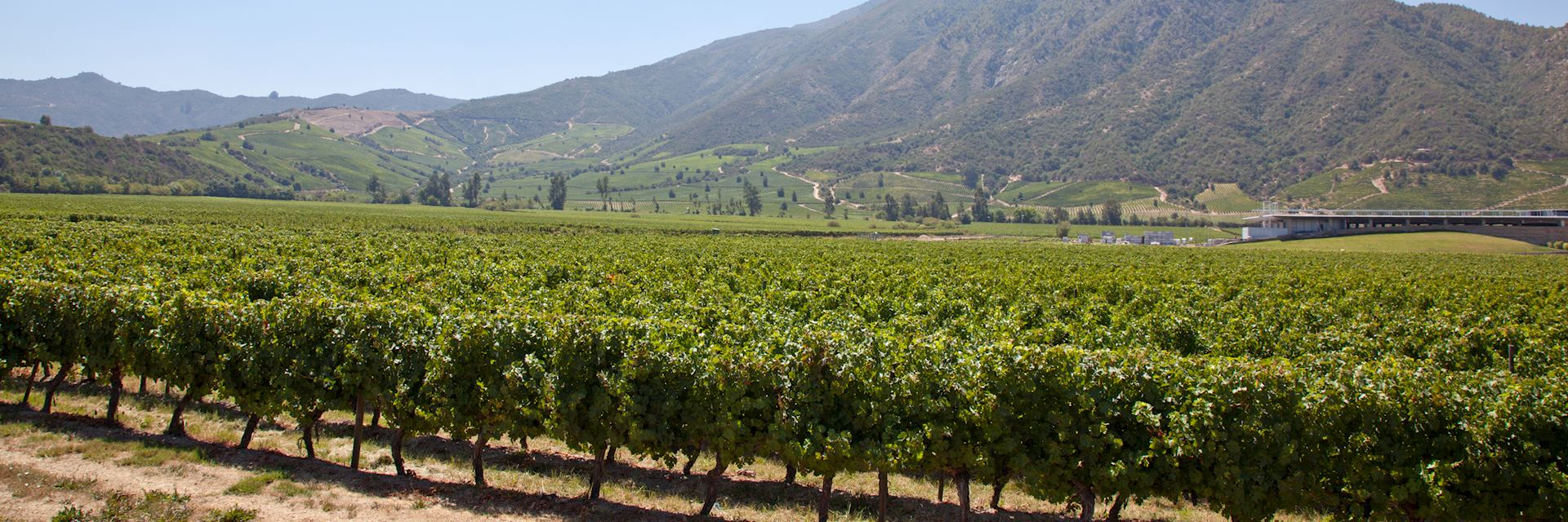Vineyard in the Colchagua Valley