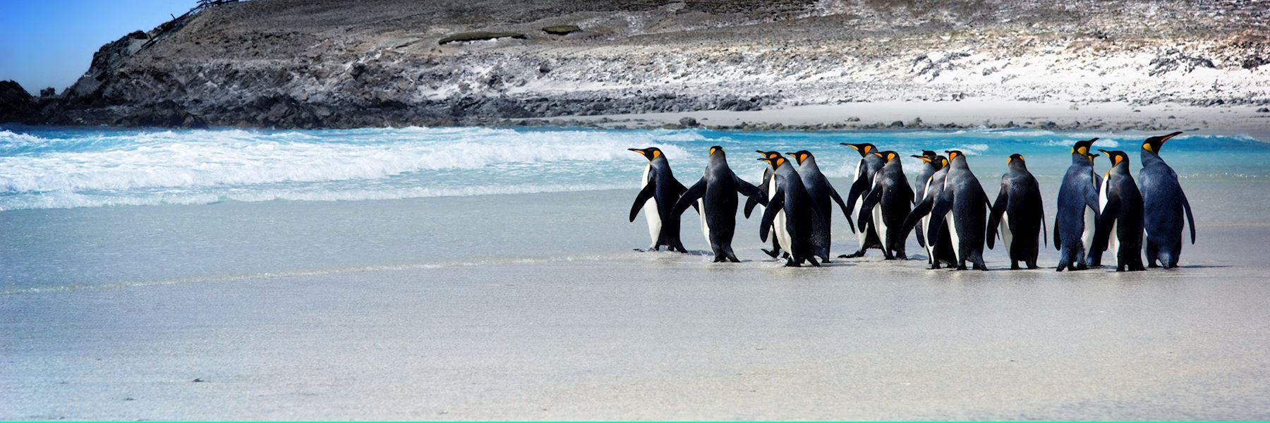Falkland Islands holidays