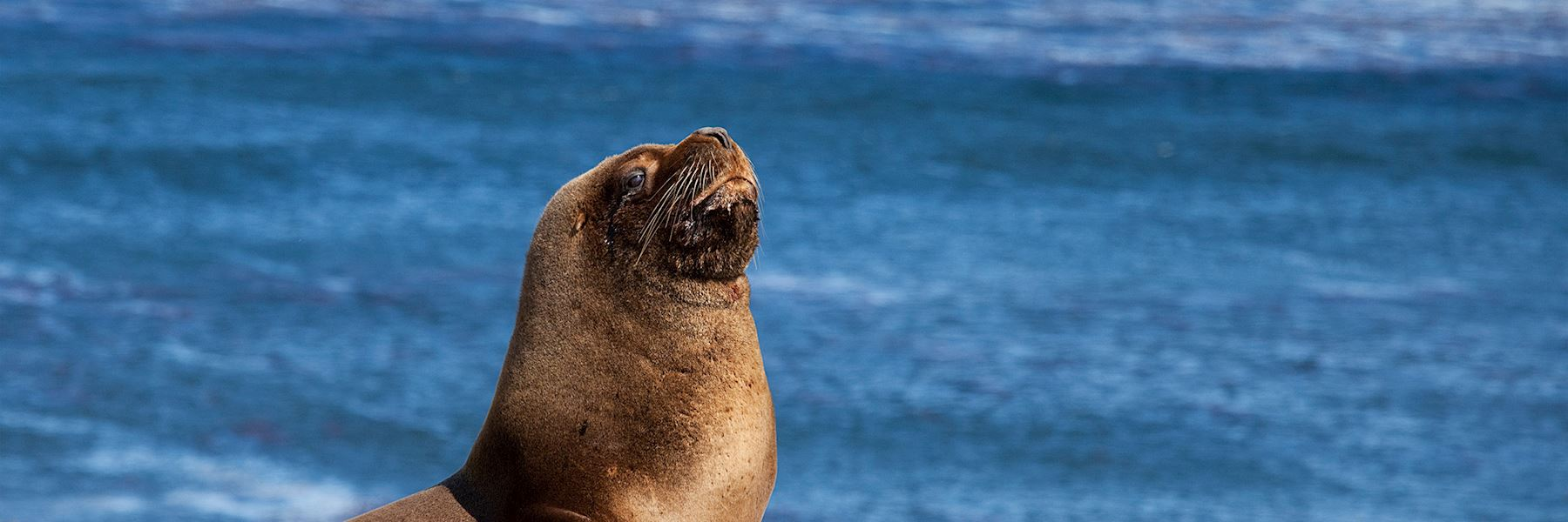When is the best time to visit the Falkland Islands?