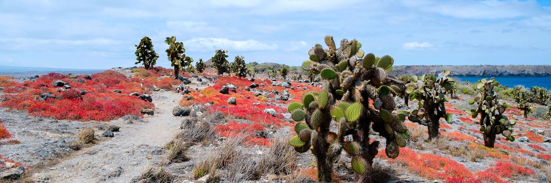 Galapagos Islands trip ideas