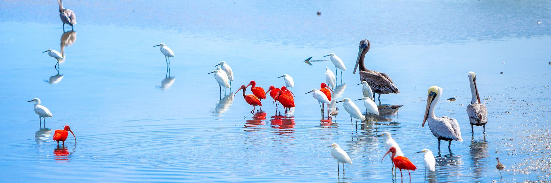Tropical birds on Venezuela's Caribbean coast