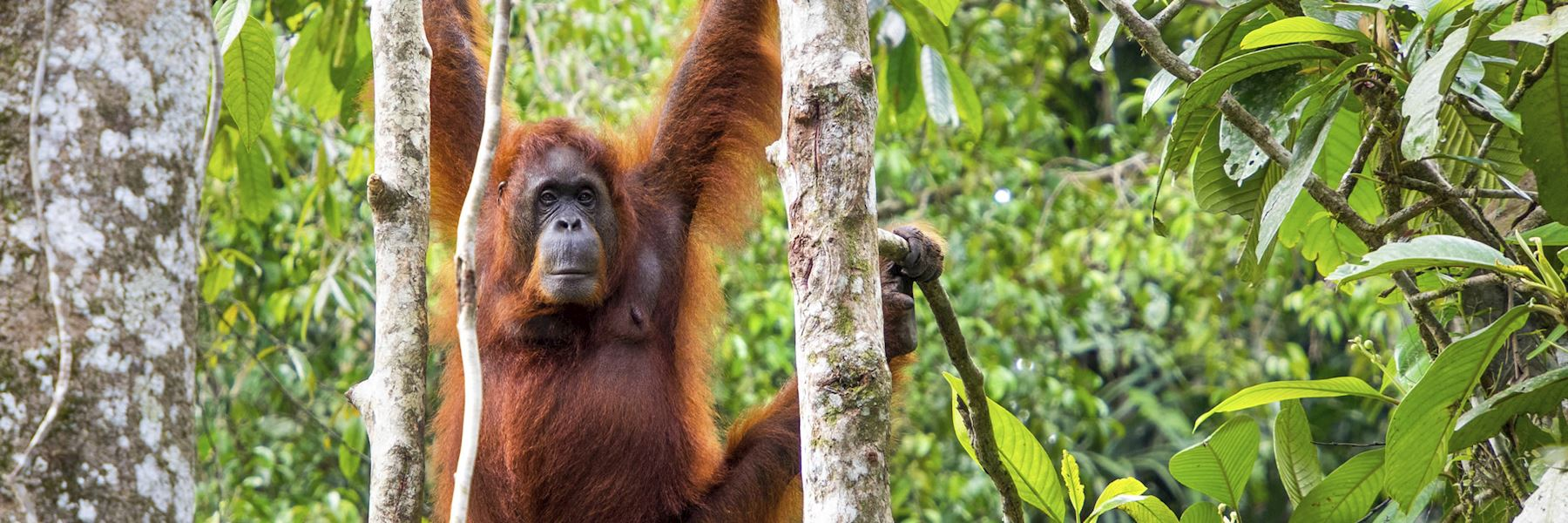 When is the best time to visit Borneo?