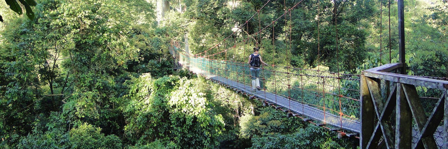 Visit Danum Valley, Borneo