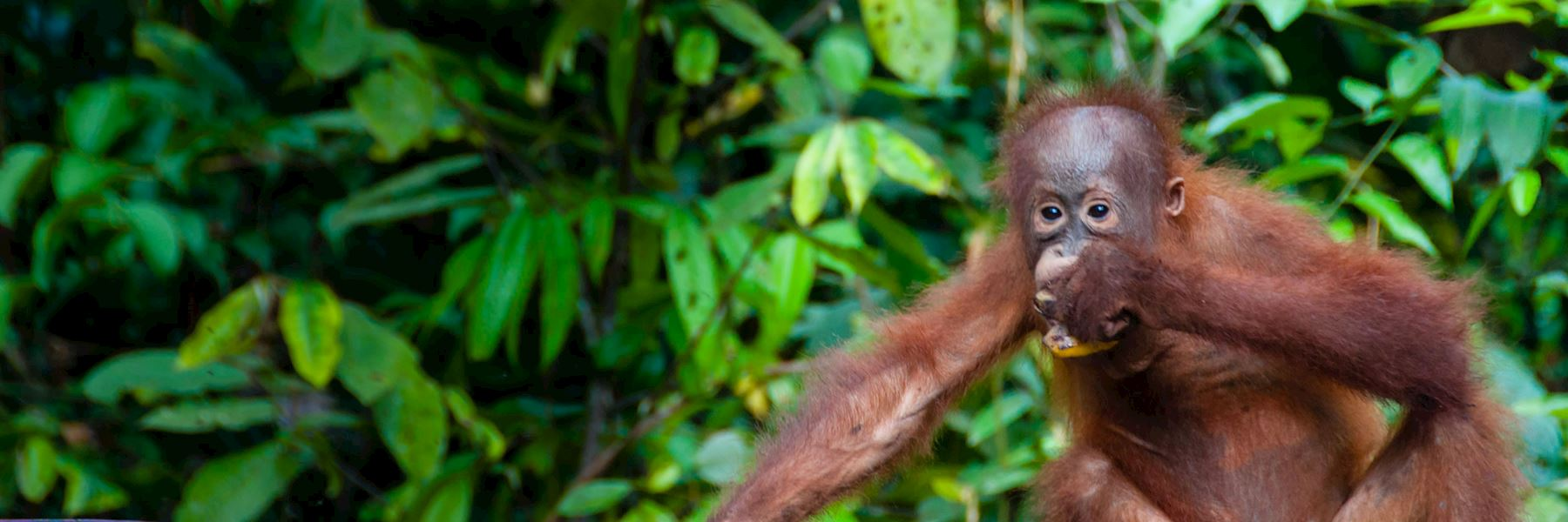 Tailor-made Sumatra Holidays