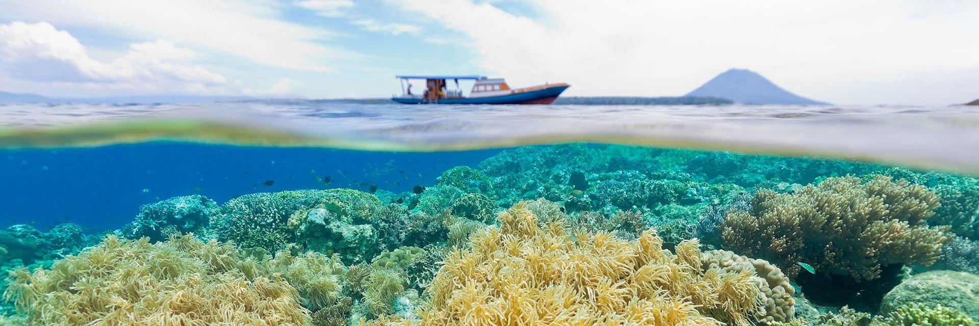 Coral reef in Manado