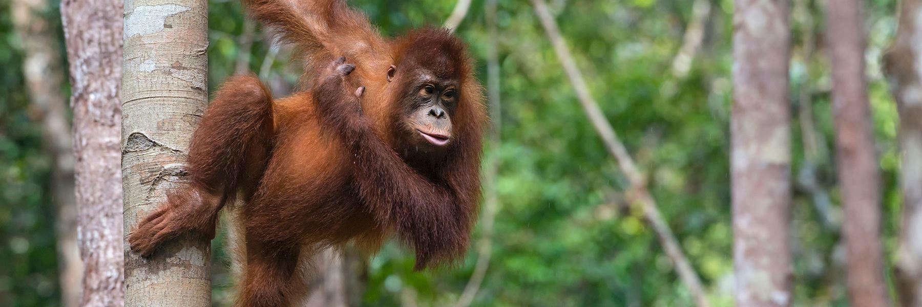Visit Kalimantan, Indonesia